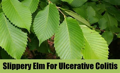 colitis and slippery elm picture 2