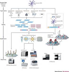 bacterial genomes sequenced picture 5