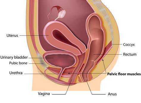 weak bladder muscles in men picture 5