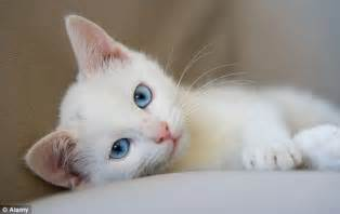 does resthyro work for cats picture 13