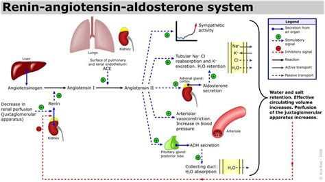 cortisol elevated testosterone picture 14