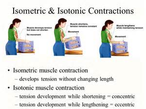 isometric and isotonic muscle contraction picture 10
