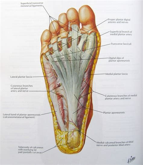 anatomy picture 2