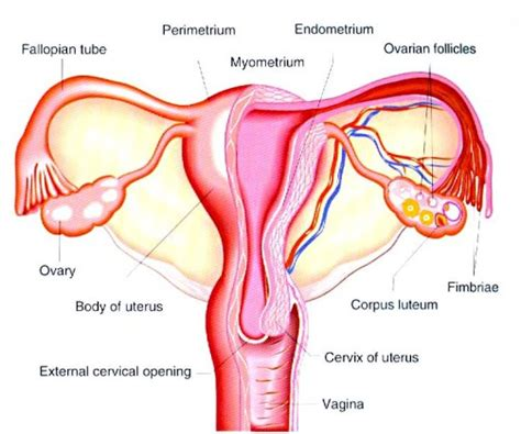 female dr examining male sex organs picture 7