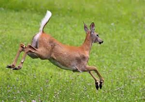 deer vagina picture 6