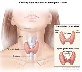 what besides nodules can cause a thyroid to picture 13