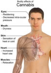 stametta body healing liquid side effects picture 7