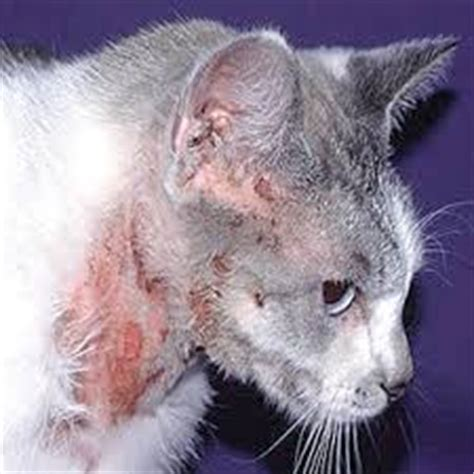 herbal house cat diseases of spleen caused by picture 5