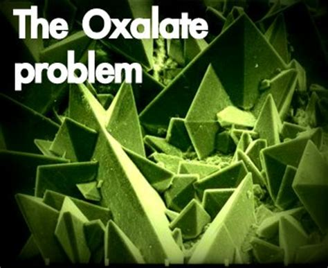 where to buy oxalobacter formigenes picture 9