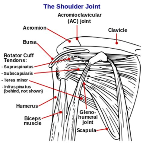 shoulder joint pain picture 17
