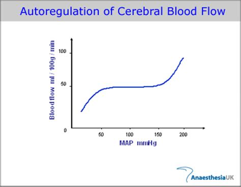 cerebral blood flow picture 5