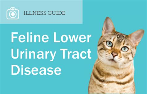feline bladder disorders picture 11