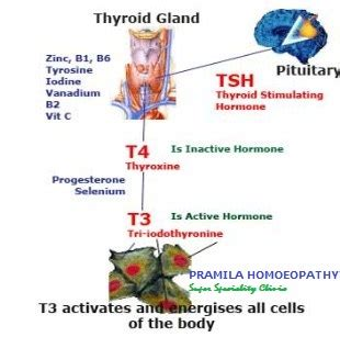 hypoactive thyroid picture 7
