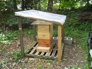 the hive shelter picture 1