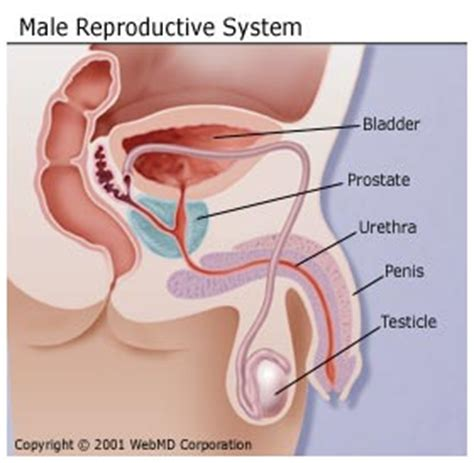 does masterbation cause enlarged prostate picture 19