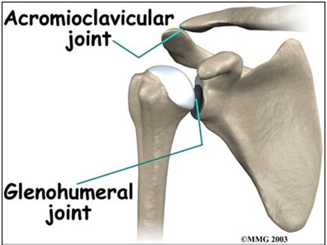 ac joint picture 11
