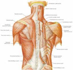 muscle pain in upper back picture 9