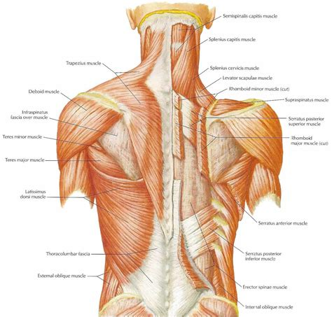 all body muscle pain? picture 6