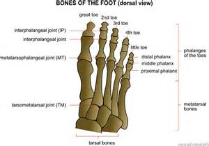 big toe metatarsal phalangeal joint foot sleeve picture 3