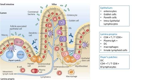 intestinal mucosal dysfunction picture 9