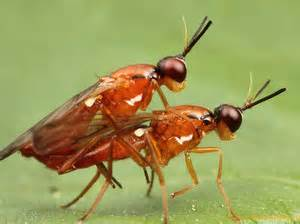 ants worms on penis torture picture 8