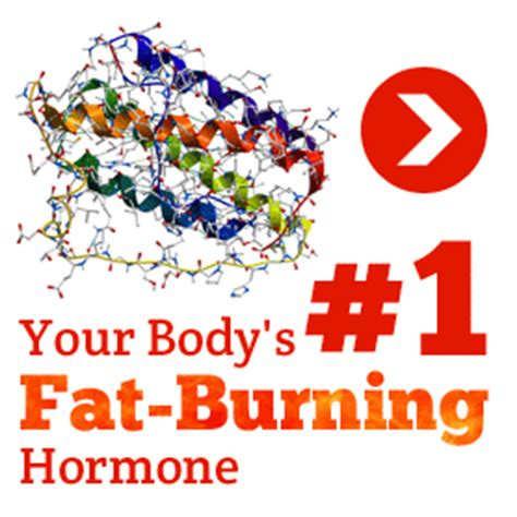 fat burning hormone picture 6