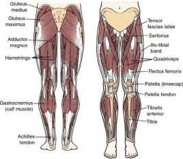 anatomy of hip joint picture 11
