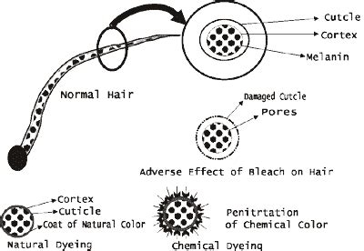 chemical composition of hair dye picture 10
