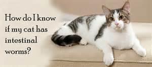 cat worm symptoms picture 17