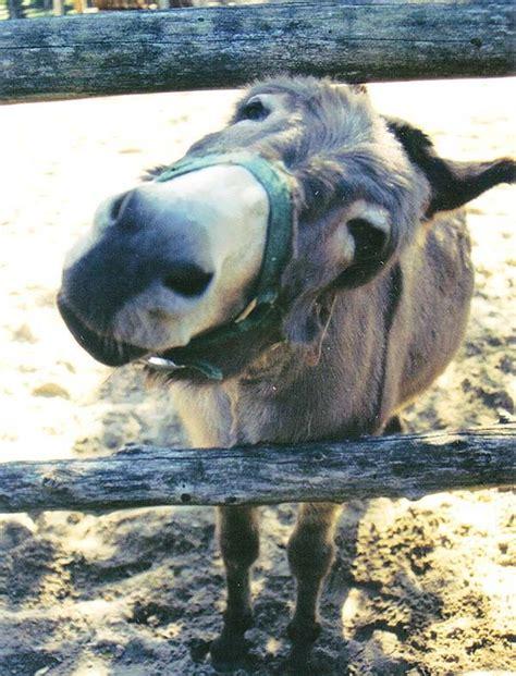 libido donkey picture 2