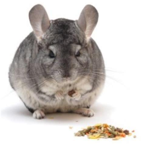 chinchilla health intestinal picture 6