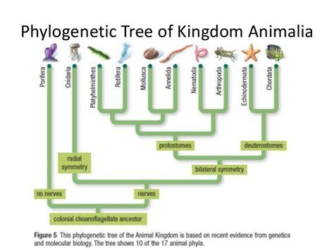 fungi classification picture 11