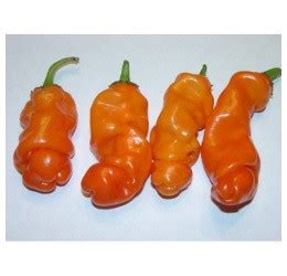 cayenne pepper erection size picture 10