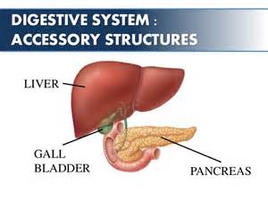 gall bladder defined patient education picture 14