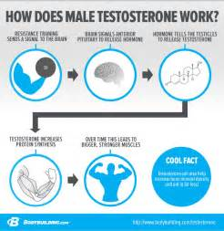 testosterone and sex picture 1