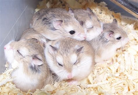 hamster videos picture 7