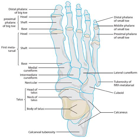 injury to mtp joint of fifth metatarsal picture 18