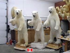 polar bear hide for sale canada picture 13