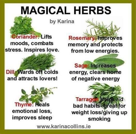 wiccan herbs and their meanings picture 10