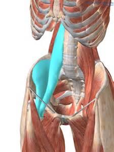iliopsoas muscle picture 2