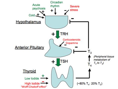 adding thyroid hormone after cancer picture 17