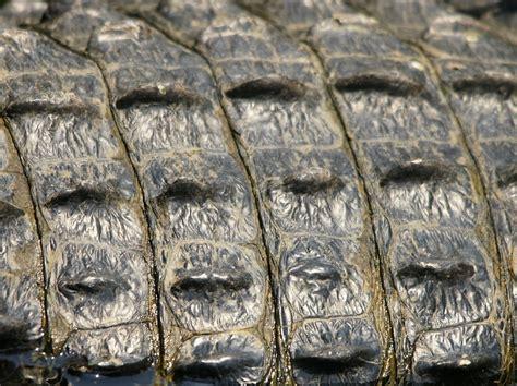 alligator skin on hands picture 3