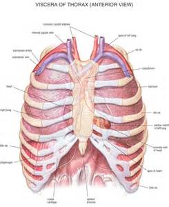 anatomy picture 5