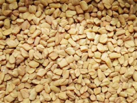 fenugreek for yeast infection picture 10