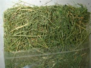 alfalfa price picture 13