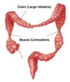 colon spasm picture 14