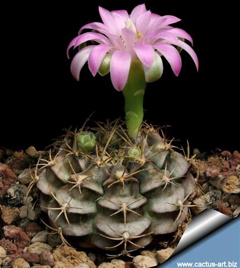 cactus picture 3