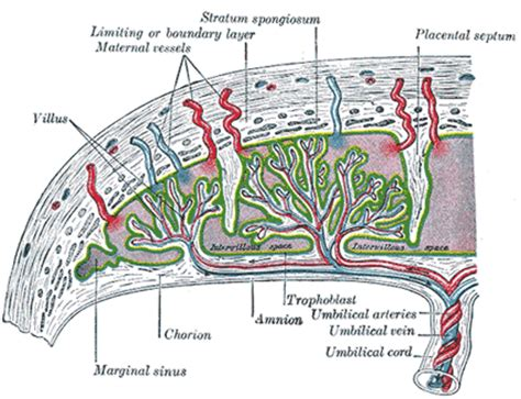 causes of decreased blood supply to placenta picture 11