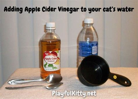 apple cider vinegar for cys is in cats picture 2