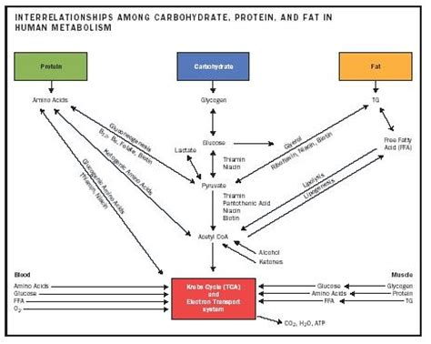 what nutrients does the liver need to metabolize picture 8